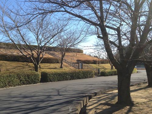 さくらの丘公園.jpg