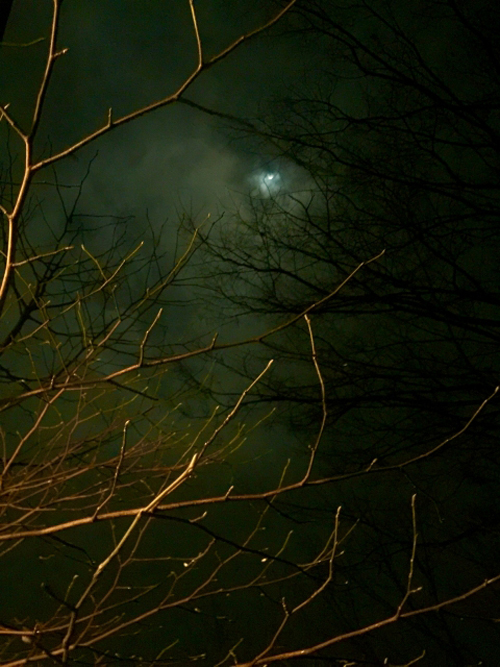 夜の月.jpg