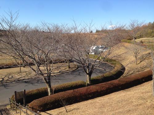 成田空港さくらの丘.jpg